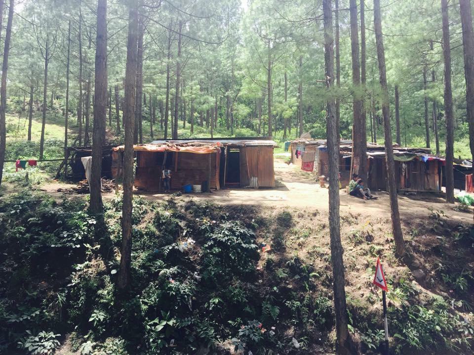 家が全壊した被災者はすむばを失い、木を伐採して公共の森に移り住んでいる